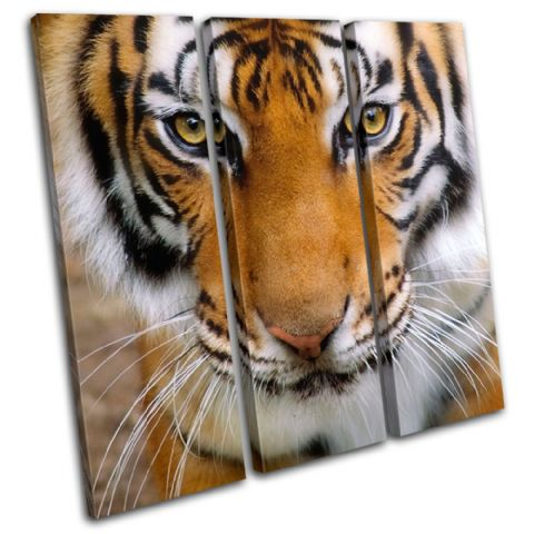 Tiger Face Animals - 13-1338(00B)-TR11-LO